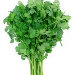 Cilantro Protects Against Salmonella