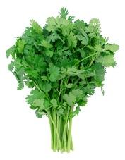 cilantro protects against salmonella