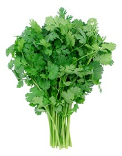 cilantro chelation therapy