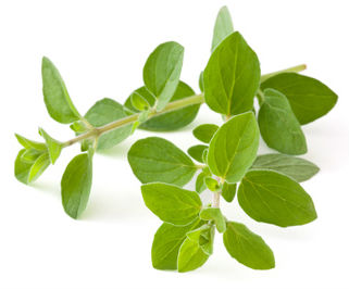 Oregano for Joy