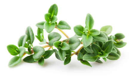 Thyme for Courage