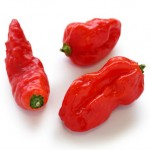 Where to Buy Naga Jolokia Peppers or Seeds
