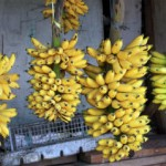 10 Quotes About Bananas