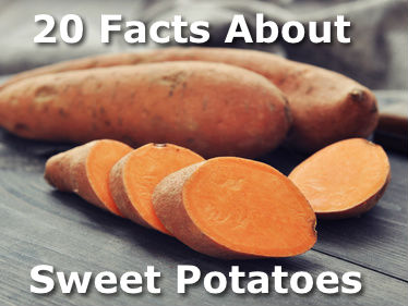 20 Facts About Sweet Potatoes
