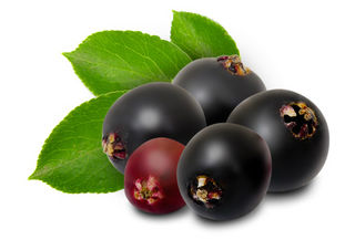 Health Benefits of Elderberry Extract