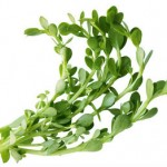 Side Effects of Bacopa Monnieri