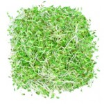 9 Health Benefits of Alfalfa Sprouts