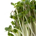 Broccoli Sprouts and Cancer