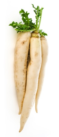 Health Benefits of Daikon Radish
