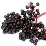 11 Health Benefits of Elderberries