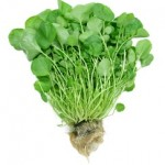 11 Health Benefits of Watercress