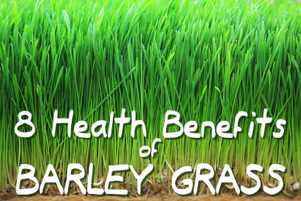 8 Health Benefits of Barley Grass
