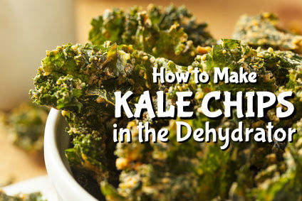 How to Make Kale Chips in the Dehydrator