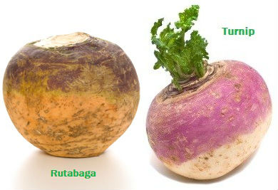 Turnip vs Rutabaga