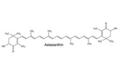 Best Astaxanthin Supplements
