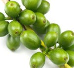 3 Best Green Coffee Bean Extracts